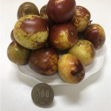 フレッシュなナツメはリンゴと似ている、甘酸っぱい、食べるとシャキシャキします。秋にしか味わえない貴重なものです。